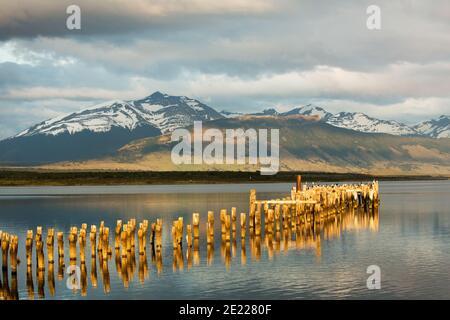Viejo embarcadero de madera reflejado en aguas del sonido Ultima Esperanze / Golfo Almirante Montt Puerto Natales, Patagonia, Chile, Andes & Torres del Paine