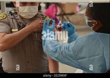Los Ángeles, California, EE.UU. 13 de enero de 2021. Un guardabosques es inoculado con la vacuna moderna COVID-19 en el sitio de vacunación del Balboa Sports Center en los Ángeles el martes, 12 de enero de 2021. Las personas de 65 años o más y las personas con condiciones de salud graves.subyacentes en los Ángeles y en toda California podrían ser rápidamente elegibles para una vacuna COVID-19, con funcionarios federales que instan a los estados el martes a distribuir más ampliamente las vacunas. Foto de Jim Ruymen/UPI crédito: UPI/Alamy Live News