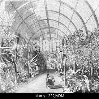 """El gran invernadero de Chatsworth - el interior, desde el paseo central, 1844. Plantas tropicales dentro de la enorme invernadero en Chatsworth House en Derbyshire. """"...los ejemplares de las majestuosas y magníficas palmeras y plátanos, el pan-fruto y la dátiles, las acacias ligeras y elegantes, los áloe, las naranjas, los citrones y los limones, los cactús y los helechos, el papiro, los callos, el arroz, y cada otra planta, cualquiera que sea su naturaleza o clima original - están en el estado más exuberante de vegetación; y, agrupados y dispuestos como son, con toda la atención al efecto pintoresco - con el lof"""