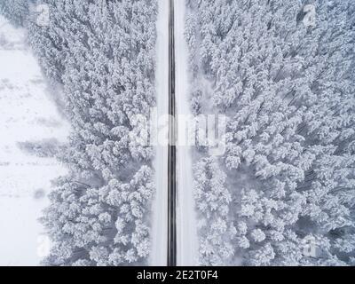 Bosque nevado de coníferas de invierno con un camino de asfalto negro. Fotografía de la naturaleza. Vista panorámica desde la cima desde una vista de pájaro