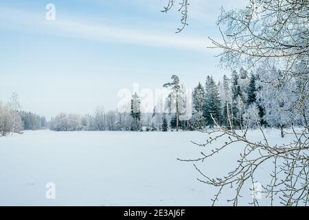 Hermoso paisaje atmosférico de invierno. Árboles cubiertos de nieve en el lago. Invierno naturaleza fondo.