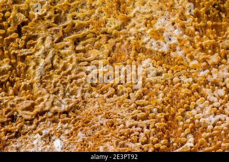 América del Norte, Wyoming, Parque Nacional de Yellowstone, Cuenca de Arena Negra. Detalle de la estera de bacterias de color termófilo.