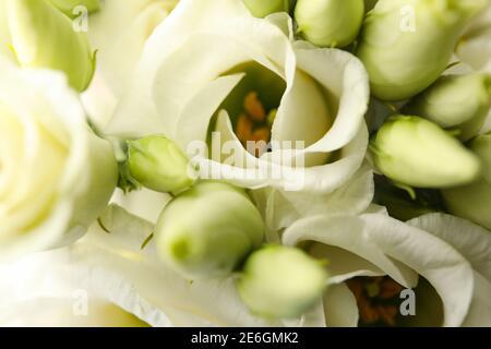 Hermosas rosas blancas en todo el fondo, de cerca