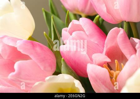Hermosos tulipanes frescos con hojas, de cerca