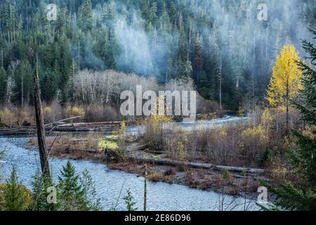 Bosque y río Skokomish, área de Staircase Rapids del Parque Nacional Olímpico, Washington, EE.UU.