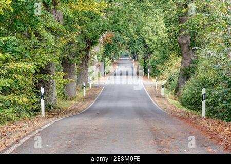 La pequeña e idílica carretera de campo conduce como una banda de olas a través de la antigua avenida arbolada en el estado de Mecklemburgo-Pomerania Occidental.