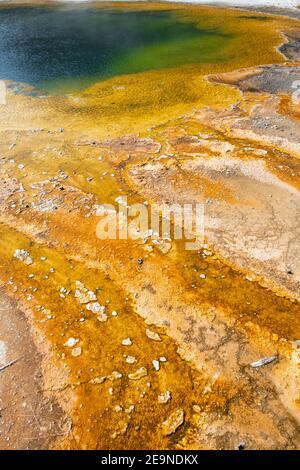 América del Norte, Wyoming, Parque Nacional Yellowstone, Cuenca de Arena Negra, Piscina Esmeralda. Piscina verde con esterilla de bacterias termopiles amarillas.