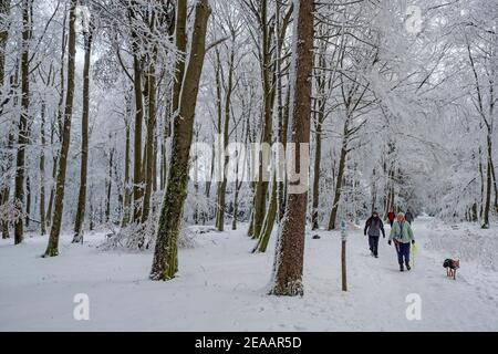 Bosque de invierno en el Erbeskopf (816 m), la montaña más alta de Renania-Palatinado, Parque Nacional Hunsrück-Hochwald, Renania-Palatinado, Alemania Foto de stock