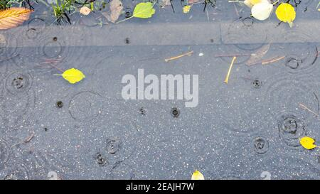 charco con hojas caídas en la acera bajo la lluvia