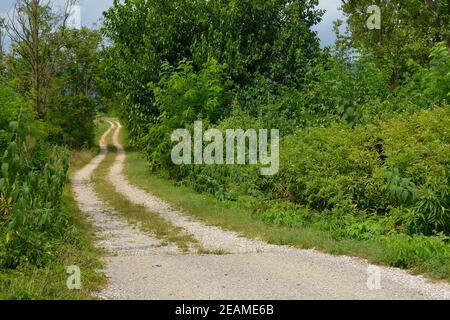 Un camino blanco de una sola pista en las zonas rurales Friuli-Venezia Giulia, al noreste de Italia, cerca de Cividale del Friuli Foto de stock