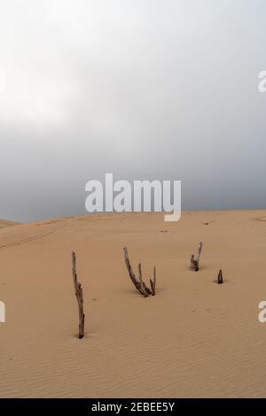 paisaje desértico salvaje y gran duna de arena con bajo un cielo nublado con árboles muertos en primer plano