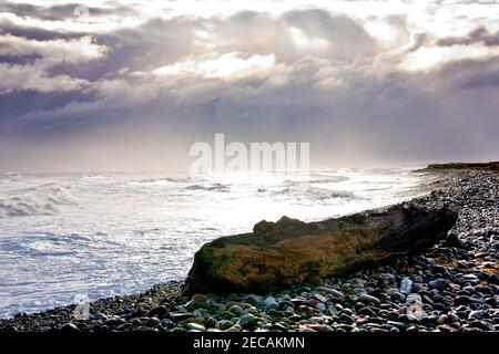 Un tronco grande o tronco de árbol se lavó en la playa de guijarros de Arbroath después de un día tormentoso.