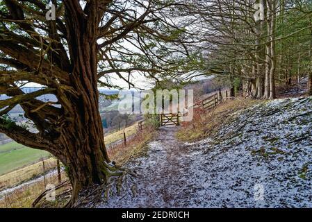 Un paisaje de invierno en Ranmore Common en el North Downs en el Surrey Hills Dorking, Inglaterra, Reino Unido