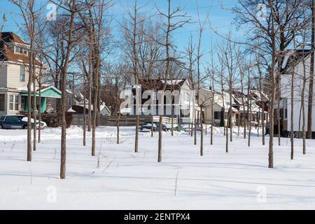 Detroit, Michigan - árboles en invierno, parte de la granja de árboles de Hantz Woodlands. La gran cantidad de tierra vacía en Detroit ha permitido a la empresa, con vol