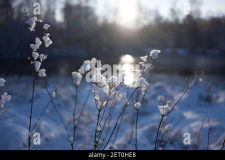 País de las maravillas del invierno en Hamburgo-Bergedorf Foto de stock