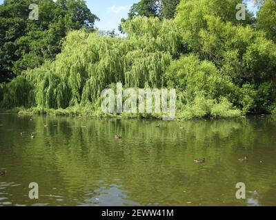 Vistas al lago de Thwaite Hall Gardens en Cottingham, East Yorkshire