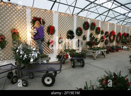 LA HISTORIA DE KRT LIFESTYLE SLUGED: HOME-TREESCENT KRT PHOTO BY PATRICIA BECK/DETROIT FREE PRESS (Diciembre 2) Sandy Randolph cuelga las coronas para la venta en un vivero en Rochester Hills, Michigan, el 19 de noviembre de 2004. (Foto de gsb) 2004