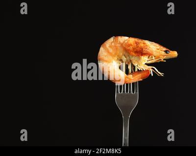 Camarón hervido real en un tenedor, aislado sobre fondo negro.