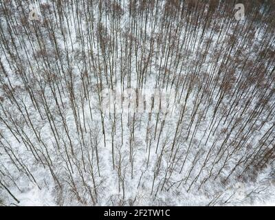 Vista aérea sobre el paisaje invernal con árboles en bosque deciduo cubierto de escarcha
