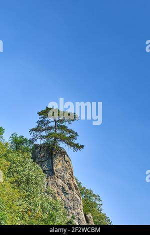 Un árbol que crece sobre una roca