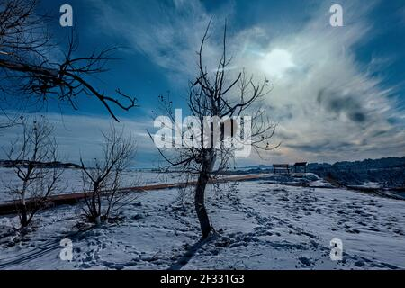 Porcupine en un árbol, Badlands National Park, Dakota del Sur, U.S.A Foto de stock