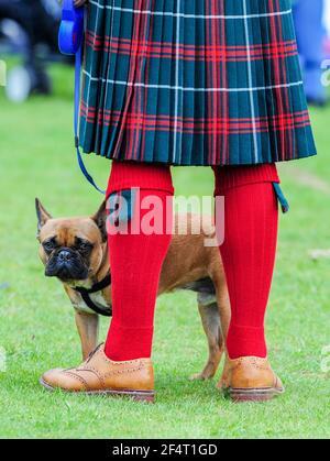 Hombre con un kilt con un perro toro francés en el Balloter Highland Games, Aberdeenshire.
