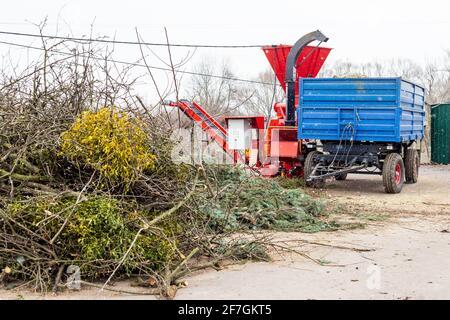 Montón de árboles coníferas y caducifolios y una trituradora de madera en el centro de compost industrial. Reciclaje de árboles de Navidad