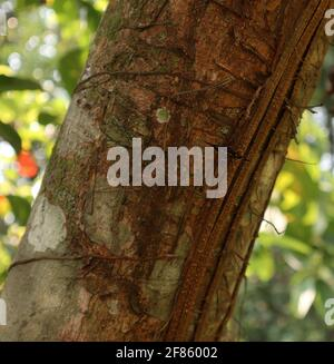 Cerca de un tronco de árbol marrón con un pequeño mariposa negra con puntos blancos y rayas naranjas