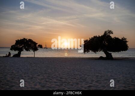 Puesta de sol en Eagle Beach Aruba, Divi Dive árboles en la costa de Eagle Beach en Aruba.