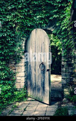 Antigua puerta de madera abierta en la pared medieval del castillo de piedra, cubierta por hiedra