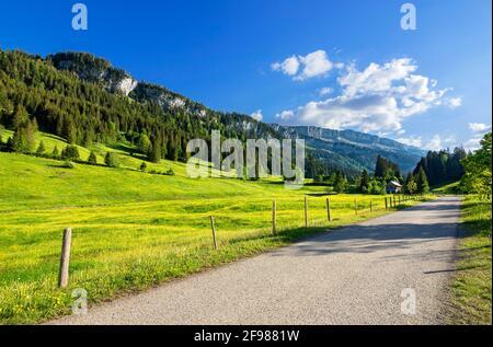 Paisaje montañoso en el Rohrmooser Tal cerca de Oberstdorf. Prados de primavera con flores amarillas, bosques y montañas. Allgäu Alpes, Baviera, Alemania