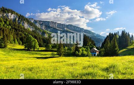 Paisaje montañoso en el Rohrmooser Tal cerca de Oberstdorf. Prados de primavera con flores amarillas, bosque y una casa. Allgäu Alpes, Baviera, Alemania