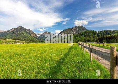 Paisaje de montaña cerca de Oberstdorf. Prados de primavera con flores amarillas, bosques y montañas en el fondo. Allgäu Alpes, Baviera, Alemania