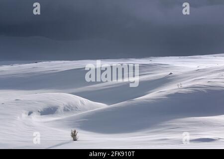 Abedul solitario en paisaje nevado en el Parque Nacional Dovrefjell-Sunndalsfjella en invierno, Noruega