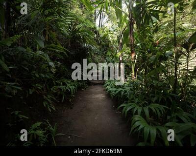 Sendero natural tropical en la exuberante selva tropical y verde A la cascada de Tibumana en Bangli Ubud Bali Indonesia Sureste Asia