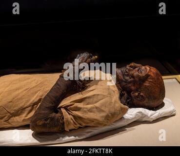 mummy de la reina Hatshepsut (murió 1458 a. C.), Museo Nacional de la Civilización Egipcia