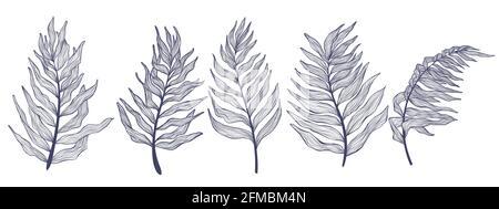 Colección dibujada a mano hojas de palmera en estilo lineal. Minimalista moderno juego de hojas de palma tropical. Haz de ilustración vectorial de aislamientos de plantas exóticas