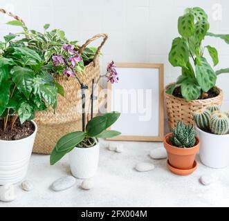 Habitación llena de un montón de plantas modernas, jardín con marco de póster falso.