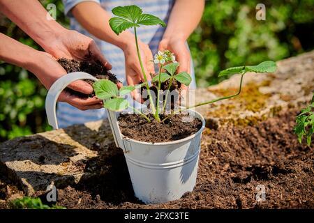 Madre con hija poniendo el suelo en la olla mientras plantando la planta de fresa en el jardín