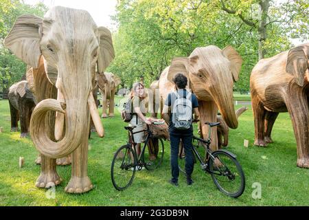 Londres, Reino Unido. 16th de junio de 2021. Pareja mirando esculturas de elefante erigidas en Green Park, London.Coexistence es una instalación de arte iniciada por la Familia de Elefantes y el Real Elefante, que consiste en 100 escultores de elefante creados por los pueblos indígenas. A partir del 14th de junio de 2021 al 23rd de julio de 2021, la manada se exhibirá en diversos lugares del centro de Londres, a saber, Green Park, St. James' Park y Berkeley Square. El movimiento busca recaudar fondos para la Familia de Elefantes en su causa de proteger la vida silvestre de la destrucción humana. Crédito: SOPA Images Limited/Alamy Live News
