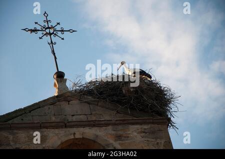 Hermosa cigüeña en su nido en la cima de una torre de chuch, visto desde abajo. Soria, España, Europa