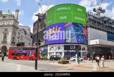 Londres, Reino Unido. 16th de junio de 2021. 'Los animales son nuestros iguales' se muestra en las pantallas de Piccadilly Circus, parte de una campaña por una sociedad libre de crueldad y pelaje realizada por la diseñadora de moda Stella McCartney y Humane Society International. Crédito: Vuk Valcic/SOPA Images/ZUMA Wire/Alamy Live News