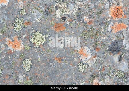 Cierre la textura vieja de la roca o de la piedra