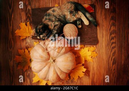 El gatito pequeño está jugando con una bola de hilo en una alfombra marrón. Calabaza madura grande, gato lindo y hojas amarillas de otoño sobre un fondo de madera.