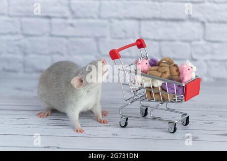 Una pequeña rata gris linda al lado del carrito de comestibles está llena de osos de peluche multicolores. Compras en el mercado. Comprar regalos para cumpleaños y vacaciones