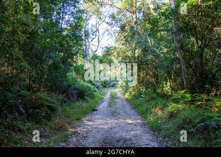 Una pista de tierra conduce a través del bosque a un destino desconocido