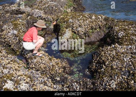 Mujer mirando en rockpool rodeado por los percebes y mejillones de la bahía de media luna en la costa oeste de la isla de Vancouver Canadá