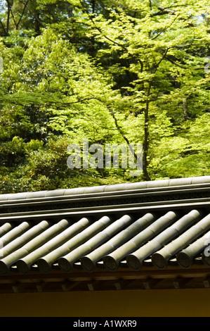Los árboles elevándose sobre las paredes del Templo Kinkakuji en Kioto, Japón Foto de stock