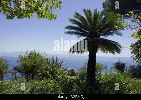 Palmeras en jardines de Villa Cimbrone de Ravello Italia