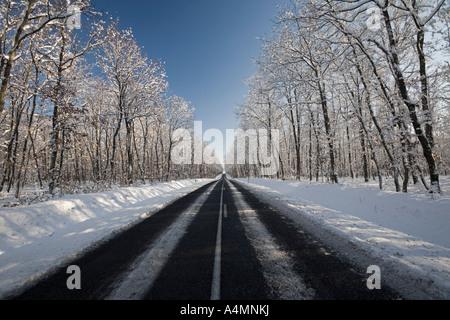 Una carretera atravesando un bosque de roble nevado (Francia). Ruta une forêt de chênes traversant (Quercus sp) recouverte de neige.